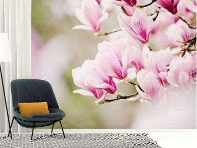 beautiful magnolia tree