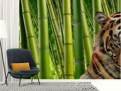 A tiger in Tall stalks of dense green bamboo in a jungle setting.
