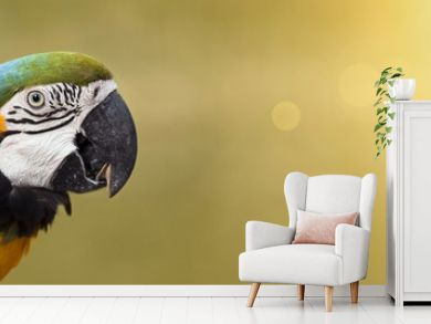 Website banner of a colorful funny parrot