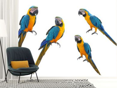 A collection of parrot macaws on a white background.