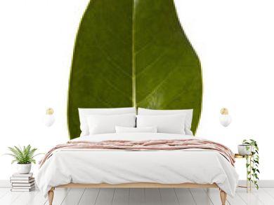 magnolia leaf on white background