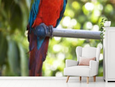 red macaw parrot sitting on a stick