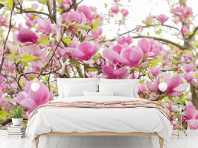 Blooming magnolia tree background