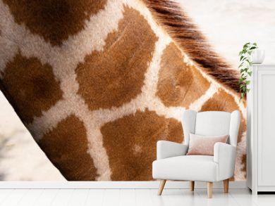 neck of a giraffe