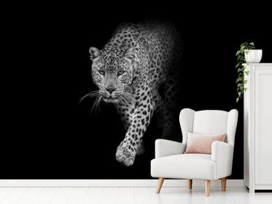 leopard wildlife animal interior art collection