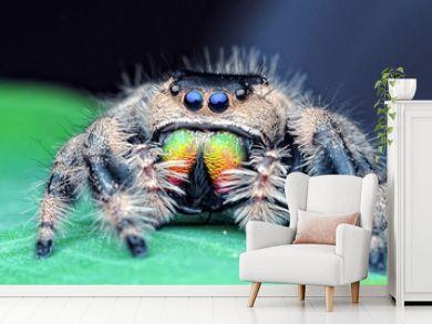 jumping spider, spider,