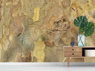 tree board background