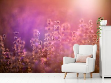Lavender flowers at sunset in a soft focus, pastel colors and blur background.