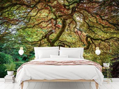 Peter Odekerken - Japanese Maple Tree