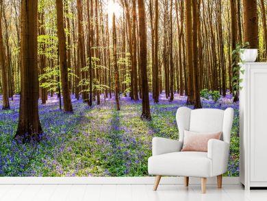 Peter Odekerken - Magical Forest