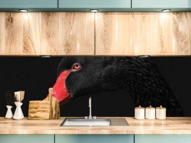 Portrait of a black swan on black