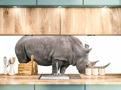 white rhinoceros ceratotherium simum isolated on white background