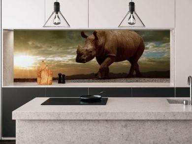 african rhinos walking on dirt field against beautiful sun set sky