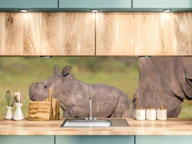 Baby Rhino or Rhinoceros
