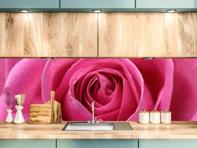 Close up of pink rose heart and petals