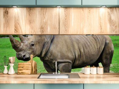 Muddy rhinoceros male, standing.