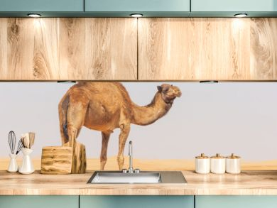 A camel in the Empty Quarter
