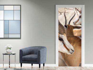Antilopen Portrait aus der Herde herraus!