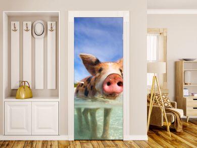 Swimming pigs of Exumas