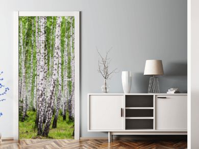 Image with birch forest.
