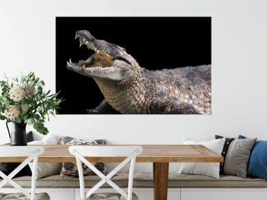 crocodile sur fond noir