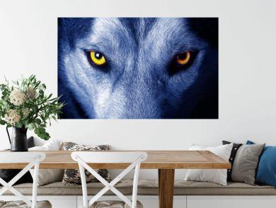 beautiful eyes of a wild wolf.