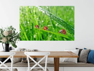 three ladybirds in the grass