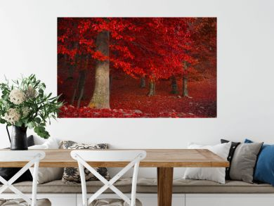 Red trees in the forest during fall