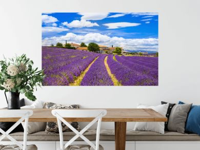 Feelds of blooming lavander, Valensole, Provence, France, europe