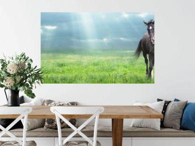 running black horse Warmblood at morning field, banner