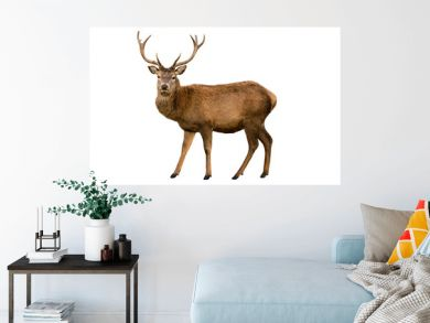 Red deer