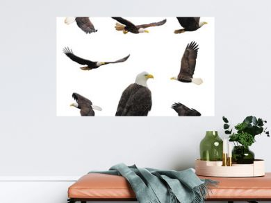 Set bald eagles.