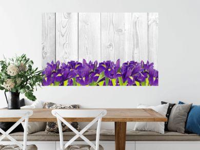 Blueflag or iris flower on white wooden background