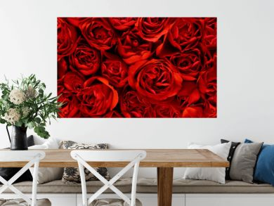 Red roses in a panoramic image