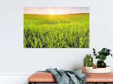 Fresh green field