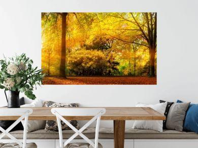 Extra breites Panorama von einem malerischen Wald im Herbst bei goldenem Sonnenschein