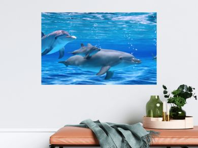 Panorama of Underwater life. Dolphins