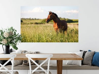 Portrait of a bay horse in the tall grass in the summer