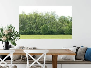High definition Treeline isolated on a white background