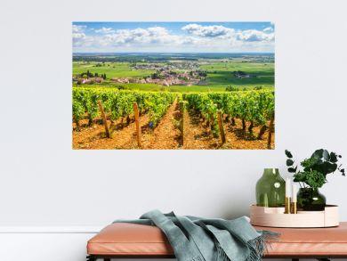 Vineyards of Burgundy, France
