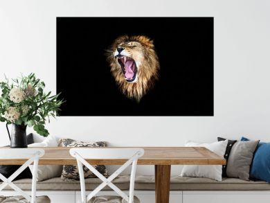 the lion roar, lion roar, lion portrait