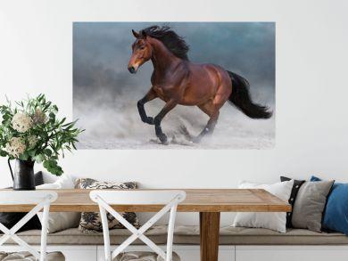 Bay horse in dust run fast against blue sky