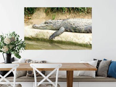 The crocodile lying on the river bank.Safari concept.