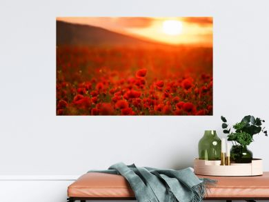 Incredibly beautiful flowering poppies. Red field of flowers at sunset.