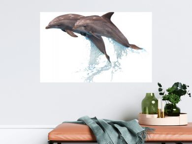 Grey dolphins isolated