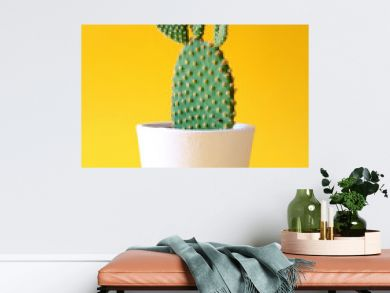 Bunny ears cactus in a white planter isolated on a bright yellow background