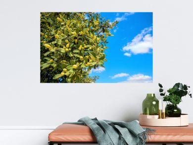 Olive tree against blue sky background