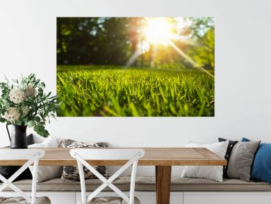 Tranquil fresh grass for growth and water concept mother nature.  Copy space for text.
