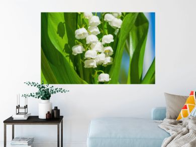 Medicinal plant Lily of the valley, white flowers with green leaves in the spring, illuminated by the sun. Lily of the valley floral background.