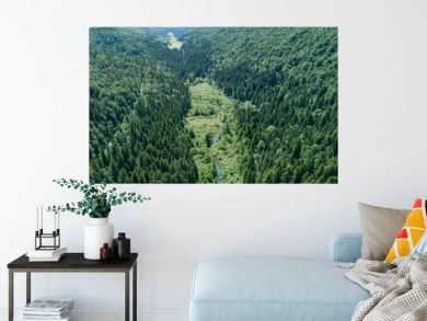 Vertical aerial view of spruce and fir forest (trees) and meadow, Slovenia.